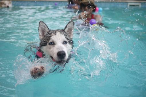 prendre soin de sa piscine