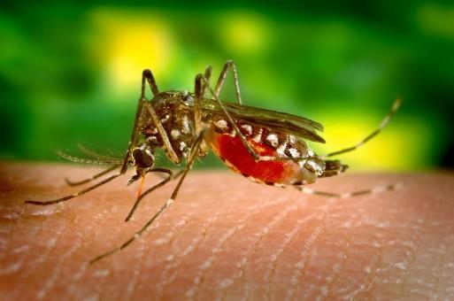 en finir avec l'invasion des moustiques