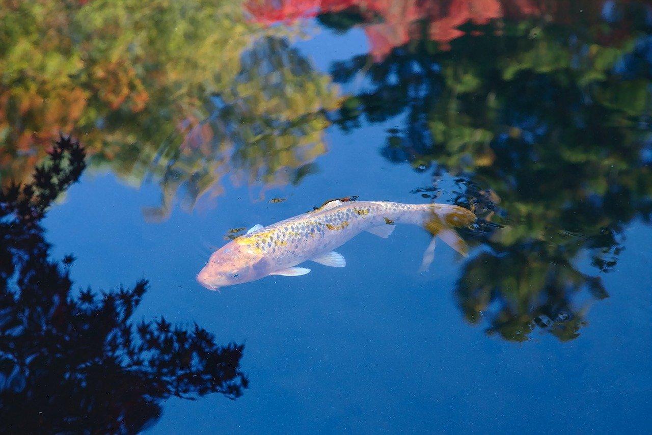 un magnifique jardin aquatique