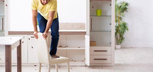 gérer les nuisibles pendant les rénovations
